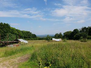 Springfield Farm     Hyde Lane, Churt, Surrey, GU10 2LP