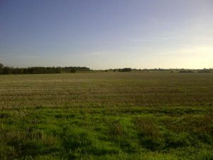 Ely, Cambs - 13.58 acres arable land